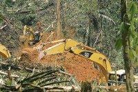 El costo de la fiebre del oro en Panamá