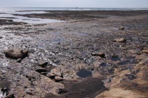 """Desastre por derrame de petróleo cerca de Comodoro Rivadavia: """"Ni las operadoras navales, ni las petroleras, ni las autoridades actuaron adecuadamente"""""""