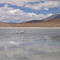 Bolivia aspira al control de su cuantioso recurso de litio