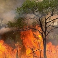 Minera Volcán incendia bosques en su camino al oro