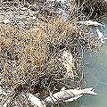 Mueren mil peces en aguas contaminadas por antigua mina