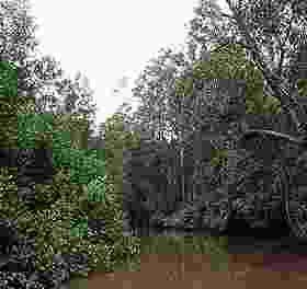 Guatemala denuncia a Goldcorp por contaminar un río