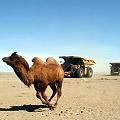 Proyecto minero en Mongolia despierta recelo de pastores
