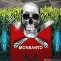 Monsanto declarado culpable por primera vez en Francia