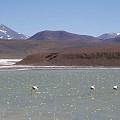El 60% de la Reserva Laguna Brava está en manos de mineras