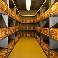 Esto es gran parte del oro enterrado en los bancos