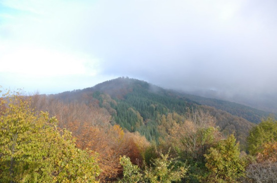 Grecia Calcídica bosque Skouries1