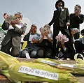 México suspende judicialmente la siembra de maíz transgénico