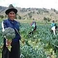 El Comercio Justo contribuye al desarrollo de las mujeres de zonas rurales