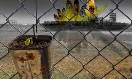 El modelo agroproductivo, en debate por Monsanto