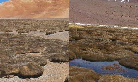 Se secan humedales por extracción de agua de Minera Maricunga (Kinross)