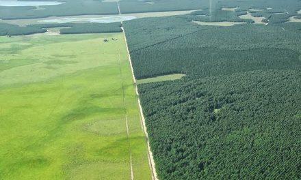 Universidad de Harvard defiende sus monocultivos forestales a ultranza