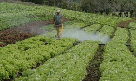 Científicos afirman que los pesticidas ponen en riesgo las reservas de alimentos