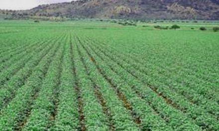 La minería acapara en México el 30% de la superficie cultivable