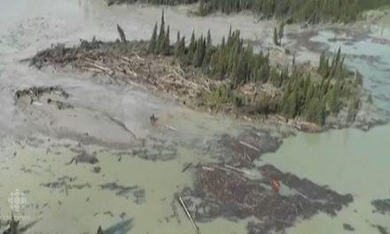 Vertido minero amenaza retorno del salmón rojo a Columbia Británica