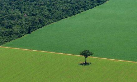 Agricultura familiar, agronegocios y transformaciòn: Identificar al sujeto agrario