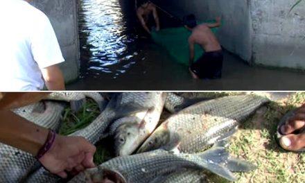 Prueban que personas consumen agua y peces del canal donde Minera Alumbrera arroja sus efluentes