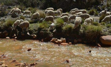 Confirman contaminación minera en río Sayaquira