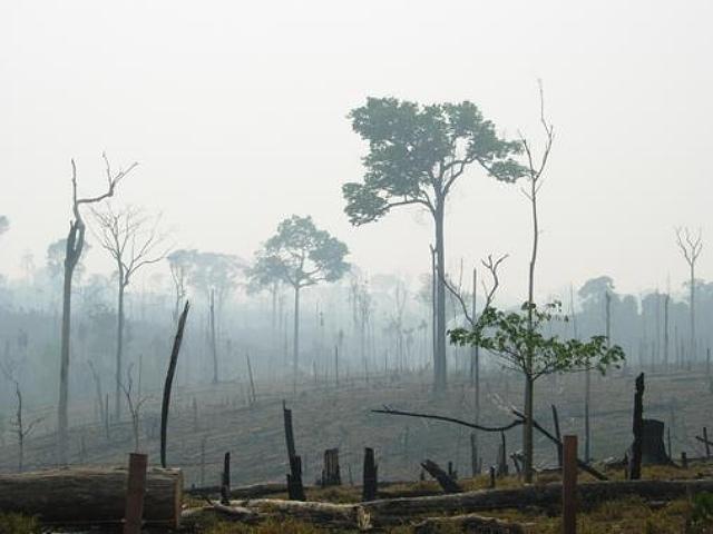 Científicos alertan de que la minería y los embalses amenazan los ecosistemas de Brasil