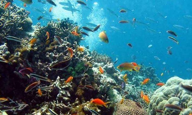 Justicia australiana frena proyecto minero en Gran Barrera de Coral