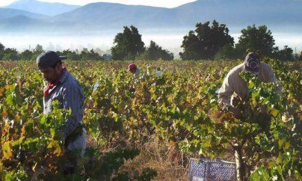 La vitivinicultura genera 35 veces más empleo que la soja