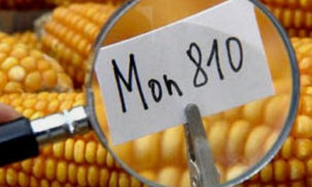 La justicia argentina rechaza pedido de patentamiento de semilla transgénica a Monsanto