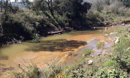 Rebaño de cabras muere al beber agua contaminada de mina de oro en Calcídica