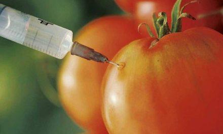 La mayoría de los transgénicos se encuentran en alimentos elaborados
