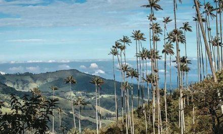 El valle de Cocora, en vilo por posible explotación minera