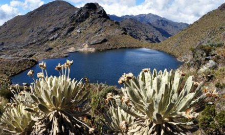 Casi 180 mil hectáreas en zonas de páramo están en manos de multinacionales a través de títulos mineros
