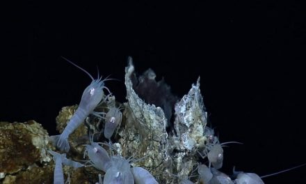 Las pérdidas de biodiversidad de la minería en aguas profundas son inevitables