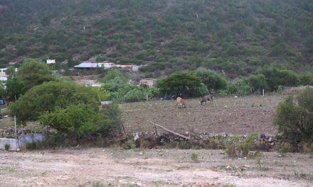Derrame de tóxicos de mina Peñoles afecta a comunidadSan José de Canutillo