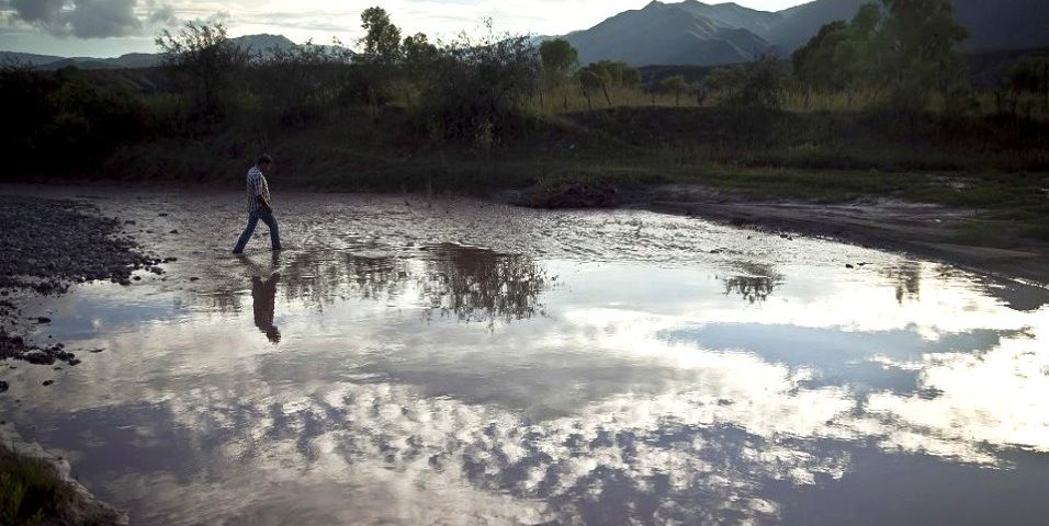 Alimentos, fauna y agua envenenados por el derrame minero en Río Sonora