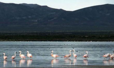 La megaminería extingue la Laguna de los Pozuelos