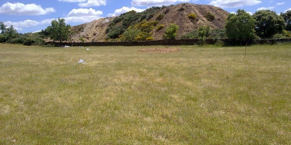 Los animales ingieren demasiado arsénico en áreas de pasto afectas por la minería