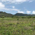 Destruirán 330 hectáreas con proyecto minero La Paila
