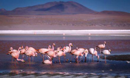 Minera Escondida y el sobreotorgamiento del agua en el Salar de Atacama