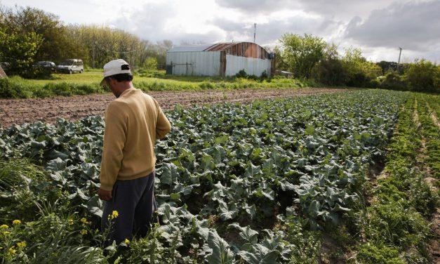 Detrás de los despidos en Agroindustria, el extractivismo minero